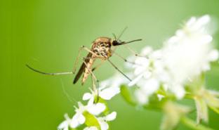 Quels sont les meilleurs anti-moustiques naturels et écologiques ?
